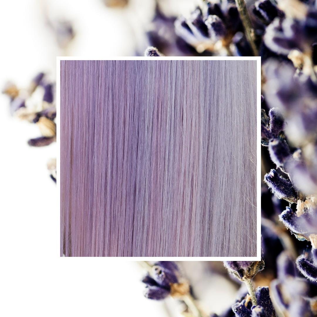 Lavender 9/6